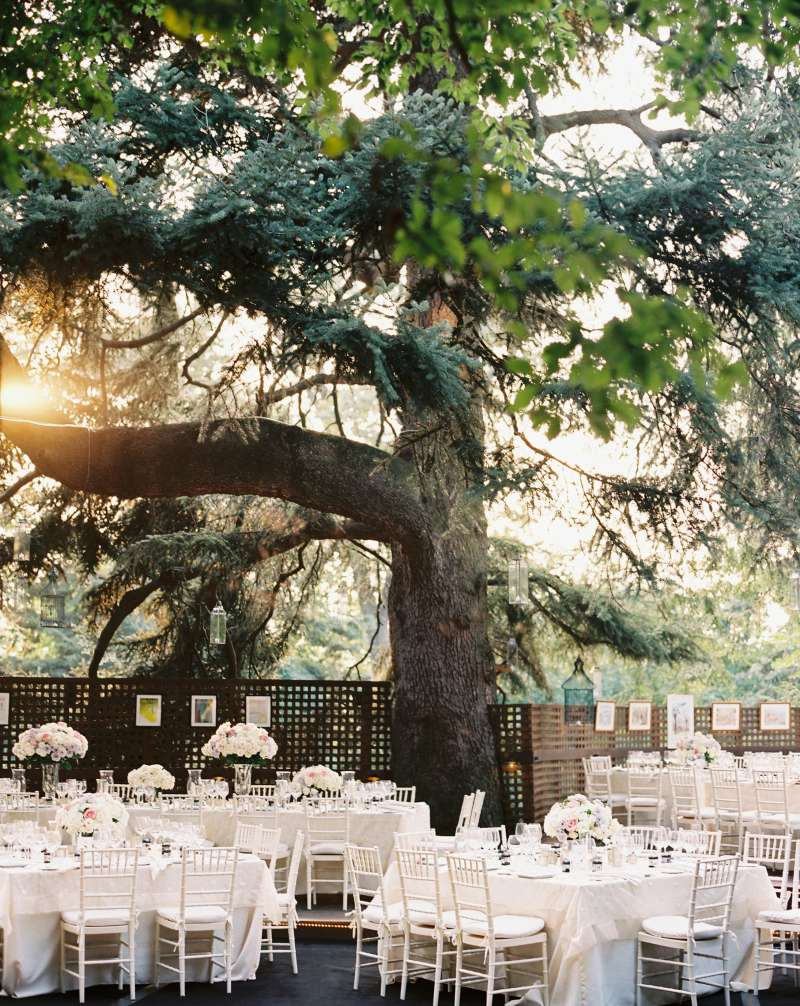 Outdoor wedding venue under a tree