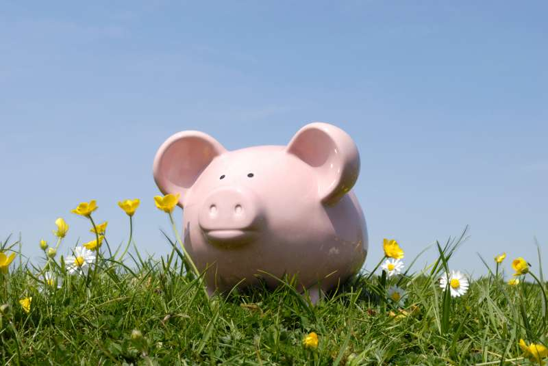 Piggy bank enjoying life in a field
