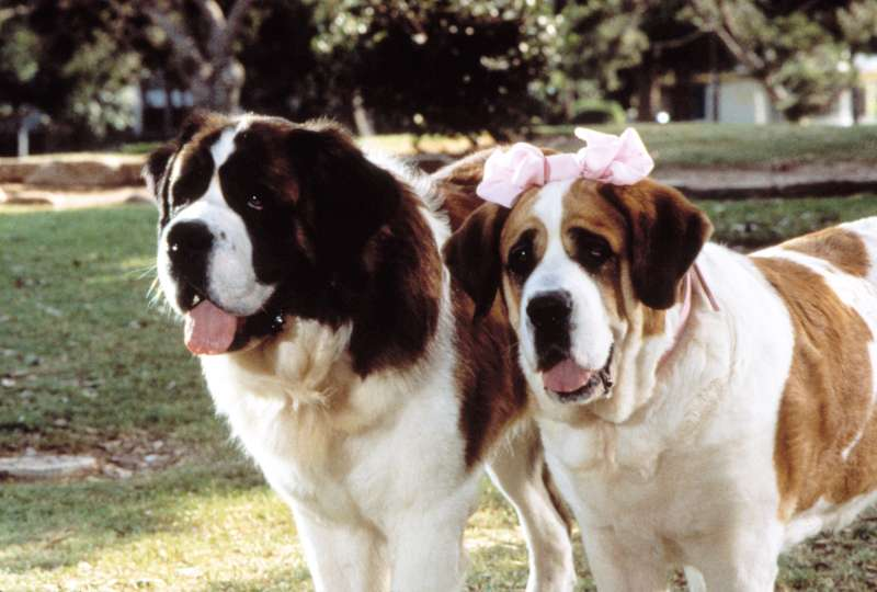 BEETHOVEN'S 2ND, Beethoven and Missy, 1993