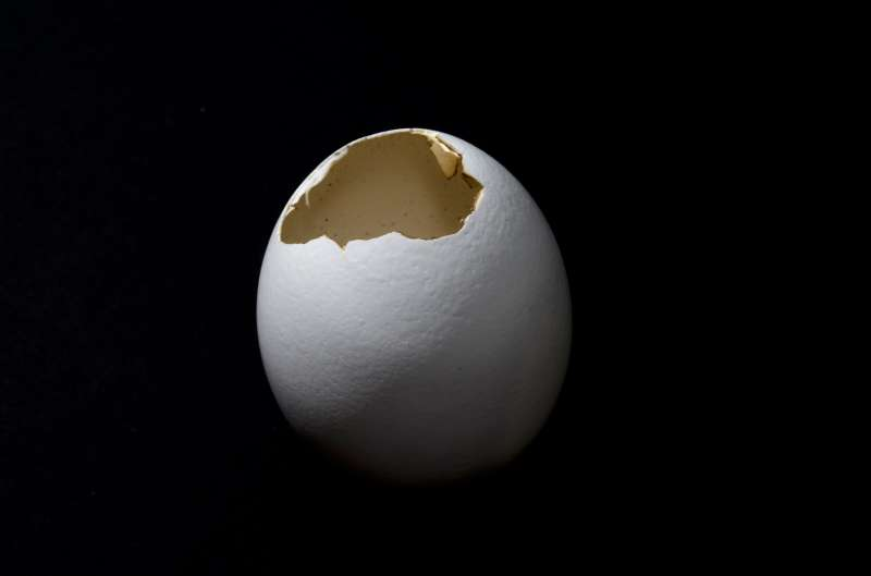 Egg with hole in it