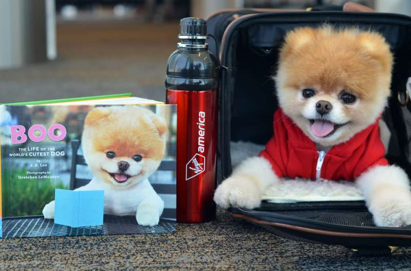 Boo the Pomeranian, named the  cutest dog in the world.