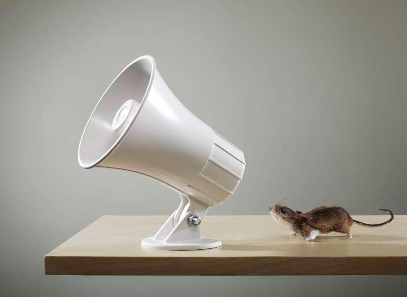 mouse talking into megaphone