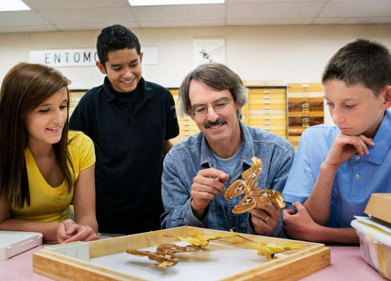 man showing insect specimens to students