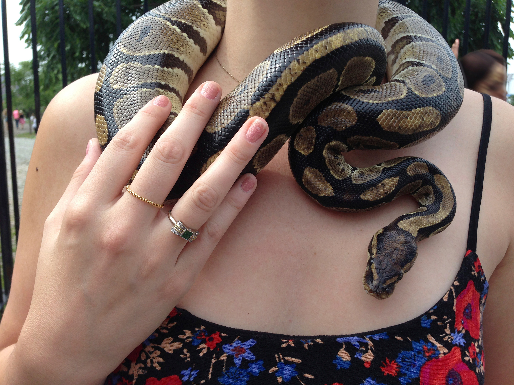 snake collar