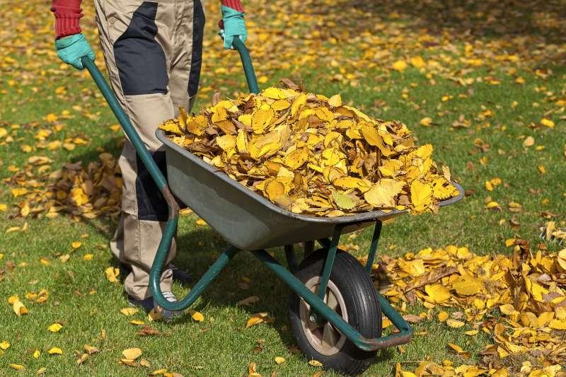 man pushing wheelbarrow of leaves