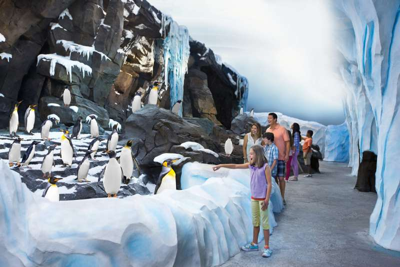 SeaWorld's newest attraction, Antarctica: Empire of the Penguin, allows guests to connect with a colony of more than 250 penguins, above and below the water.