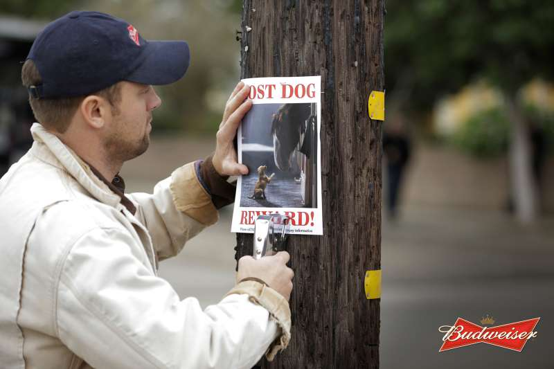Budweiser puppy commercial