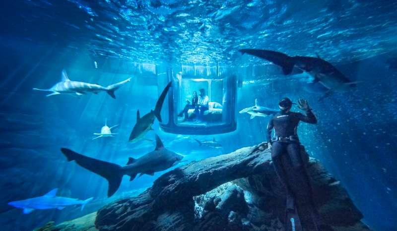 shark aquarium airbnb bedroom