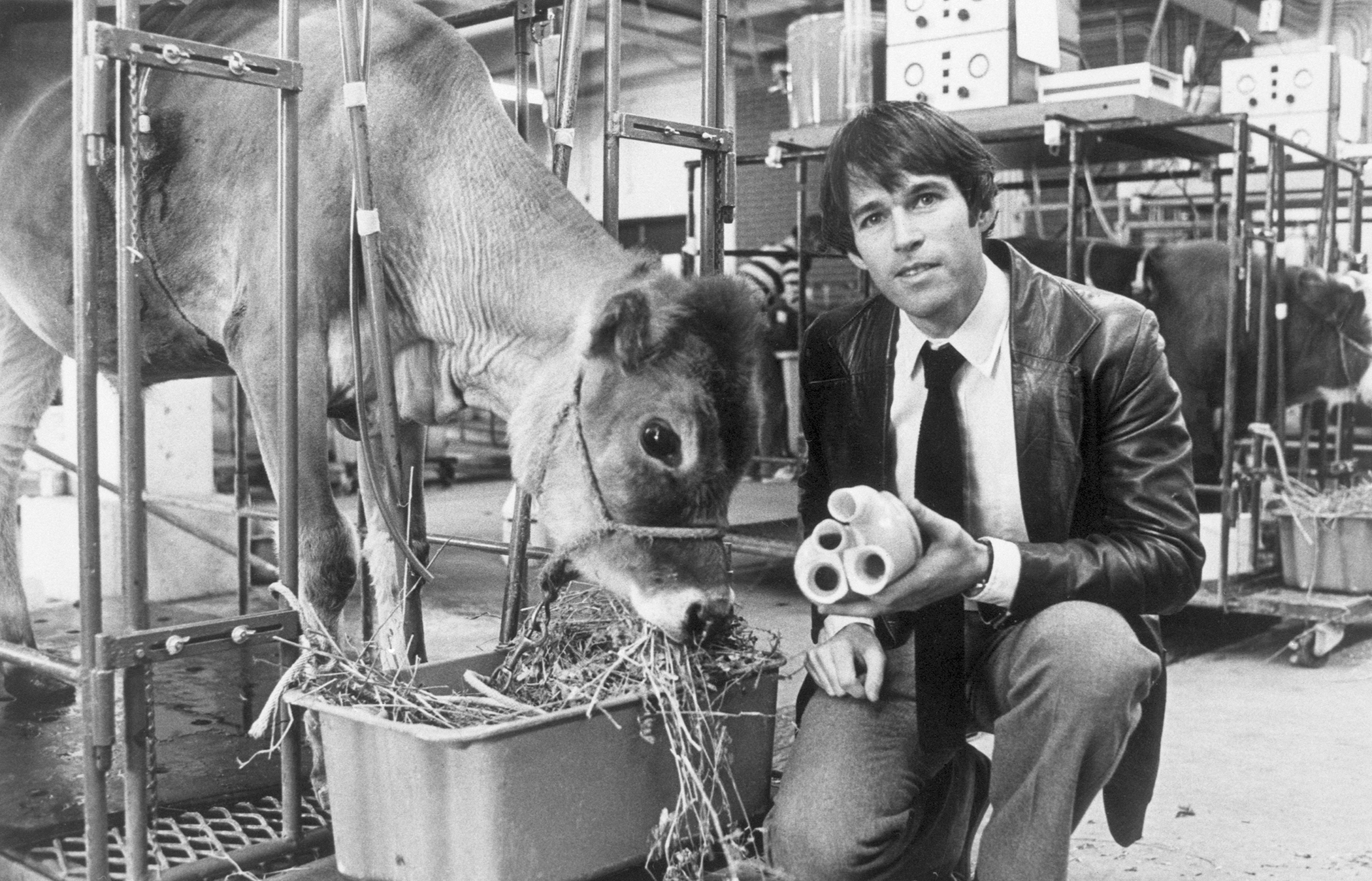 Dr. Robert K. Jarvik, who designed the University of Utah mechanical heart of plastic, is seen here last month with calf that lived for 268 days with the machine beating in the place of its heart. He holds the plastic heart device in hand, Salt Lake City, Utah, March 17, 1981.
