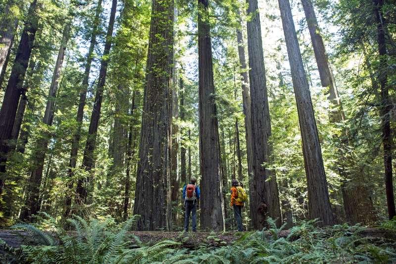 Hiking through the Redwoods, California