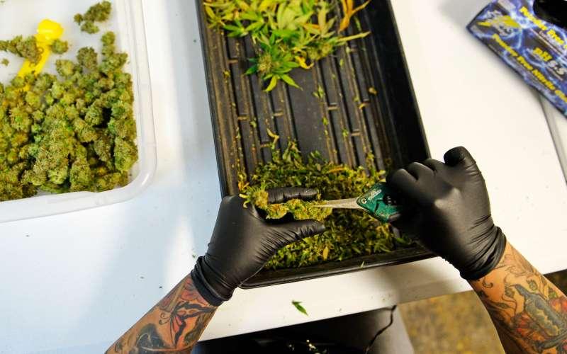 recreational marijuana in Colorado