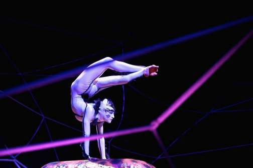 Cirque du Soleil Is the Latest Group to Cancel Shows in North Carolina Over Anti-Gay Law