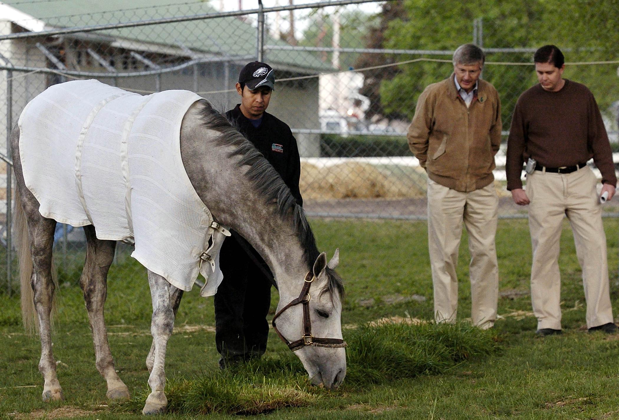 160504_GAL_Horse_Sperm