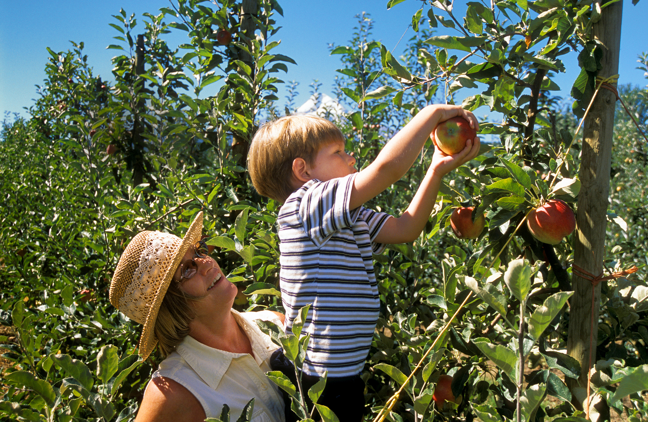 boy and mother picking apples