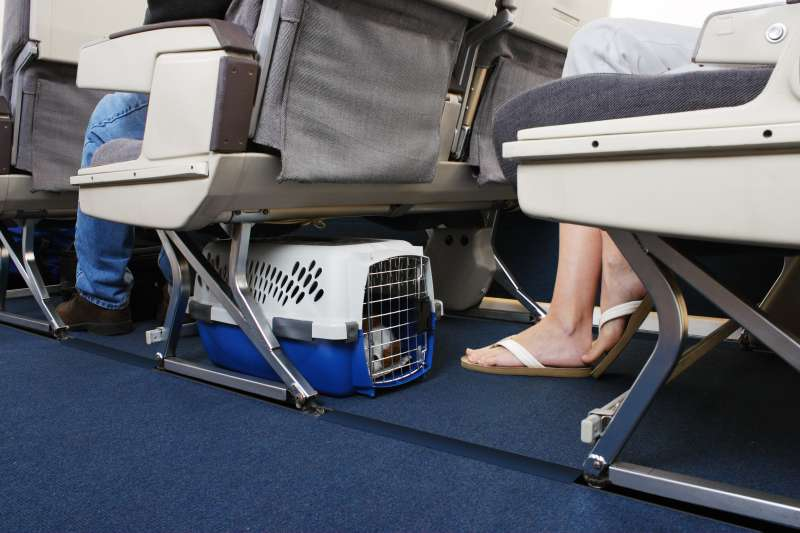 Traveling With Pet On Airplane