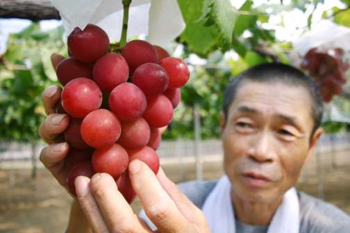 A Bunch of Grapes Sold for $11,000 in Japan