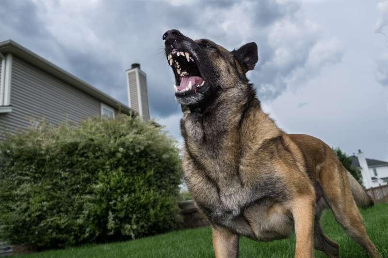 Low Angle View Of German Shepherd Barking In Yard Against Sky
