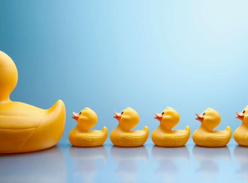 little ducks following big duck