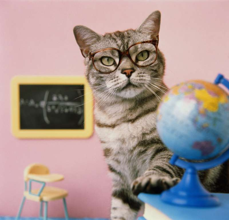 cat and glasses and globe