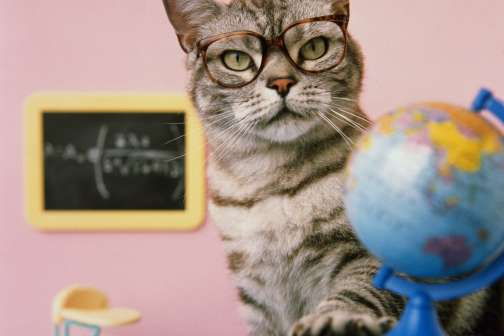 Four Things Your Cat Can Teach the Kids About Money