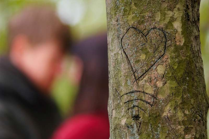 HEART AND Wifi symbol carved into tree