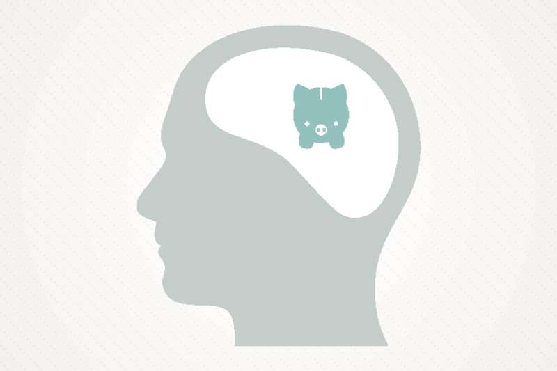 Head and piggy