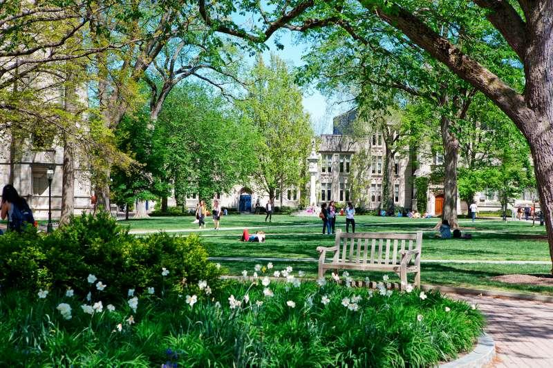 Summer greenery in the courtyard of McCosh Hall, Princeton University.