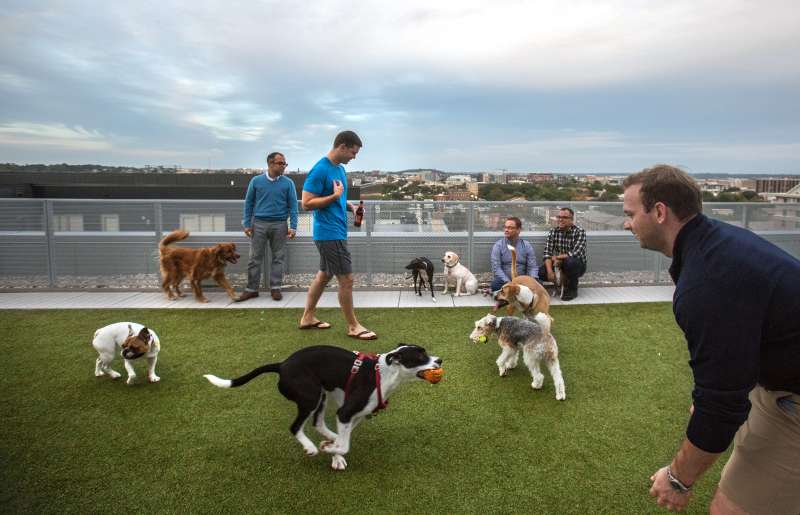 Dog friendly apartment buildings in DC