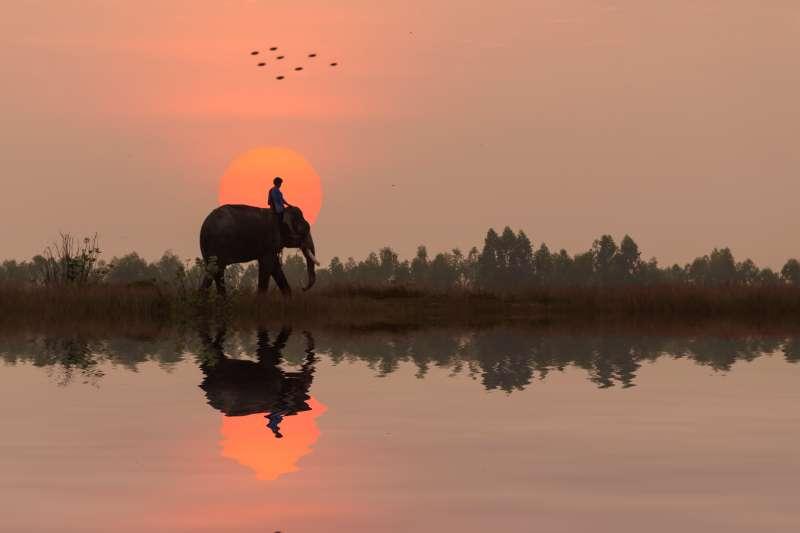 Man sitting on an elephant in Thailand.