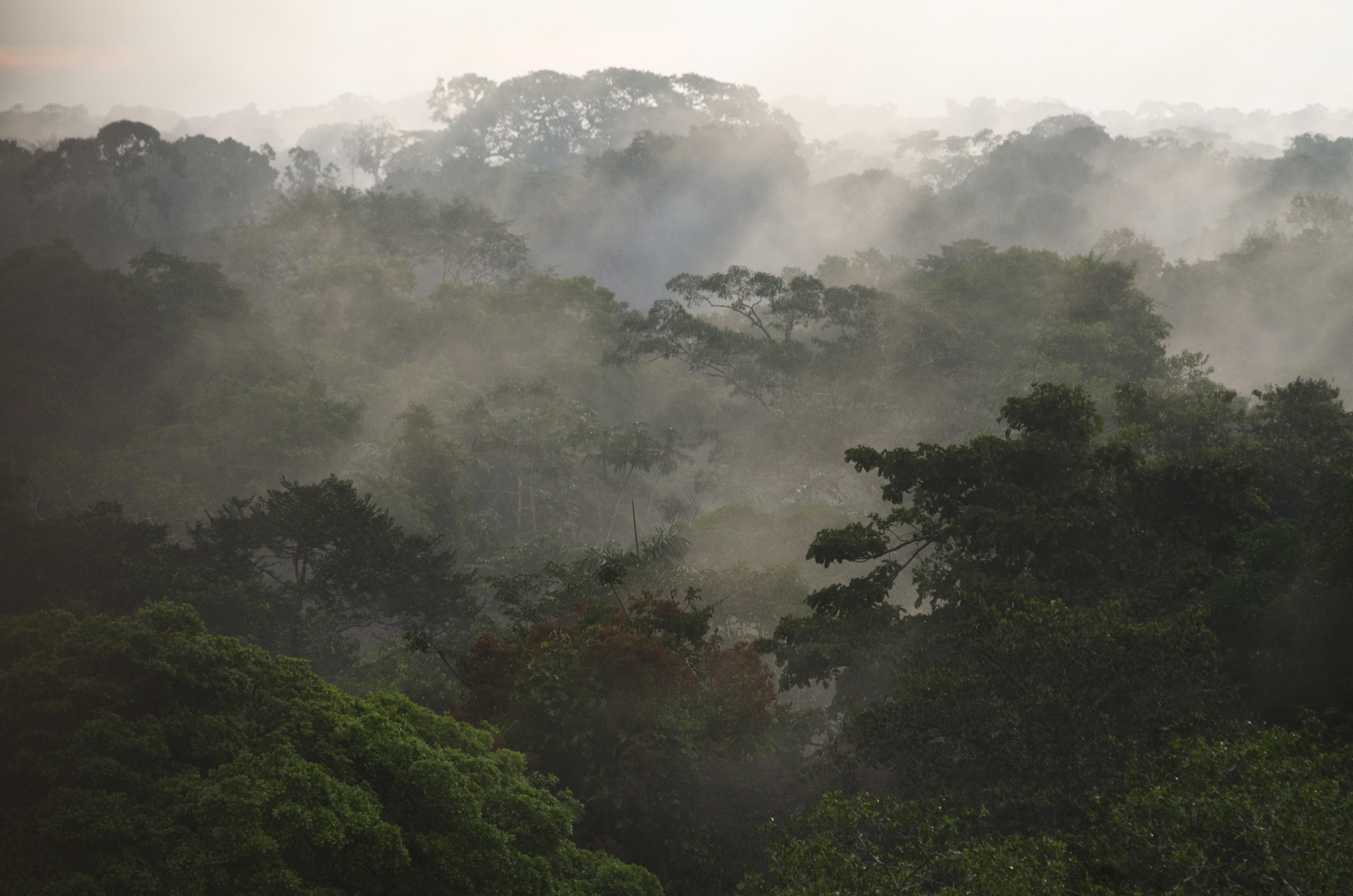 Canopy Scenic, Yasuni National Park, Amazon Rainforest, Ecuador