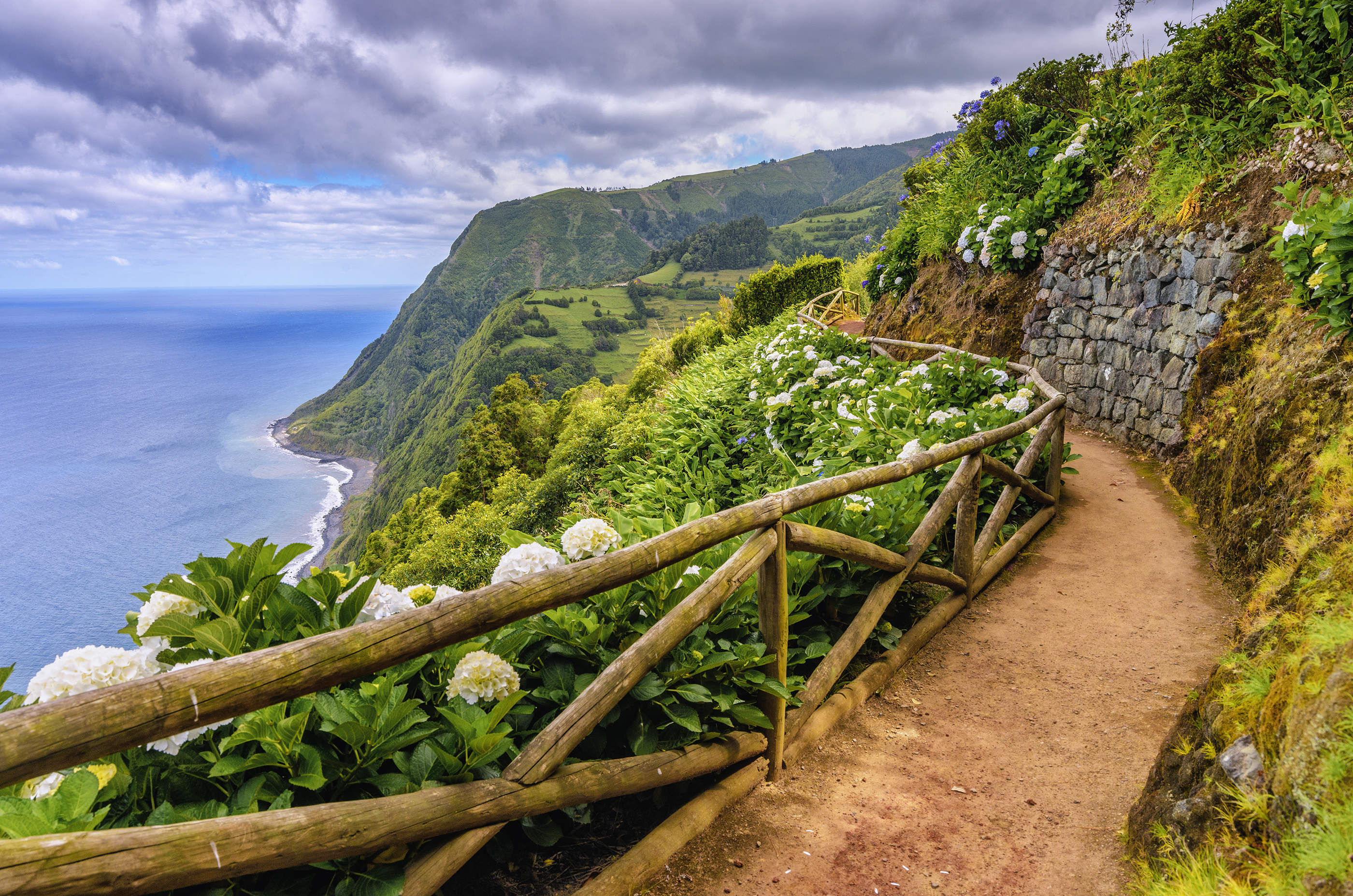 Hiking path along hydragenia and dramatic landscape near Nordeste, Sao Miguel (Azores)