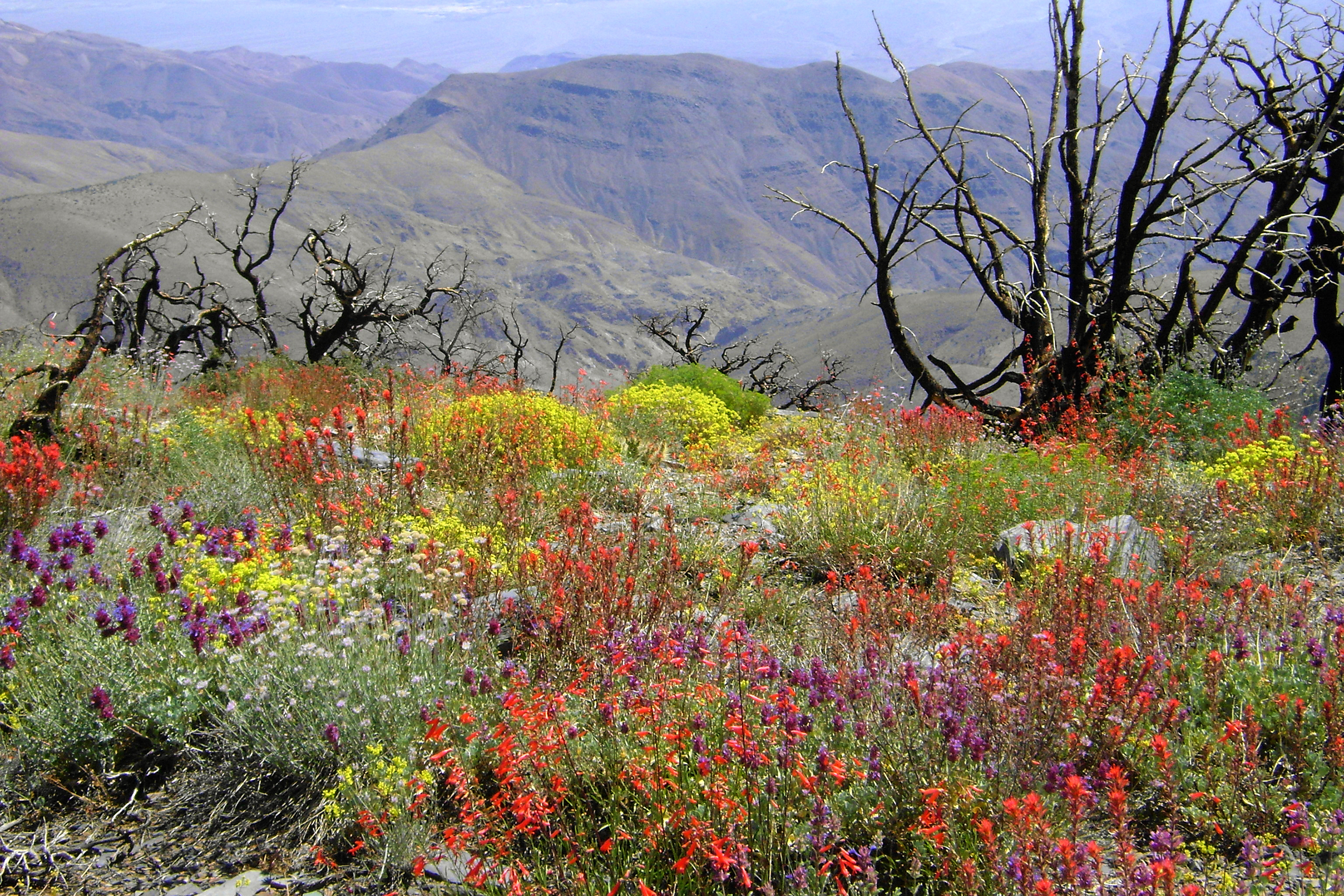 180601-best-national-parks-death-valley-2