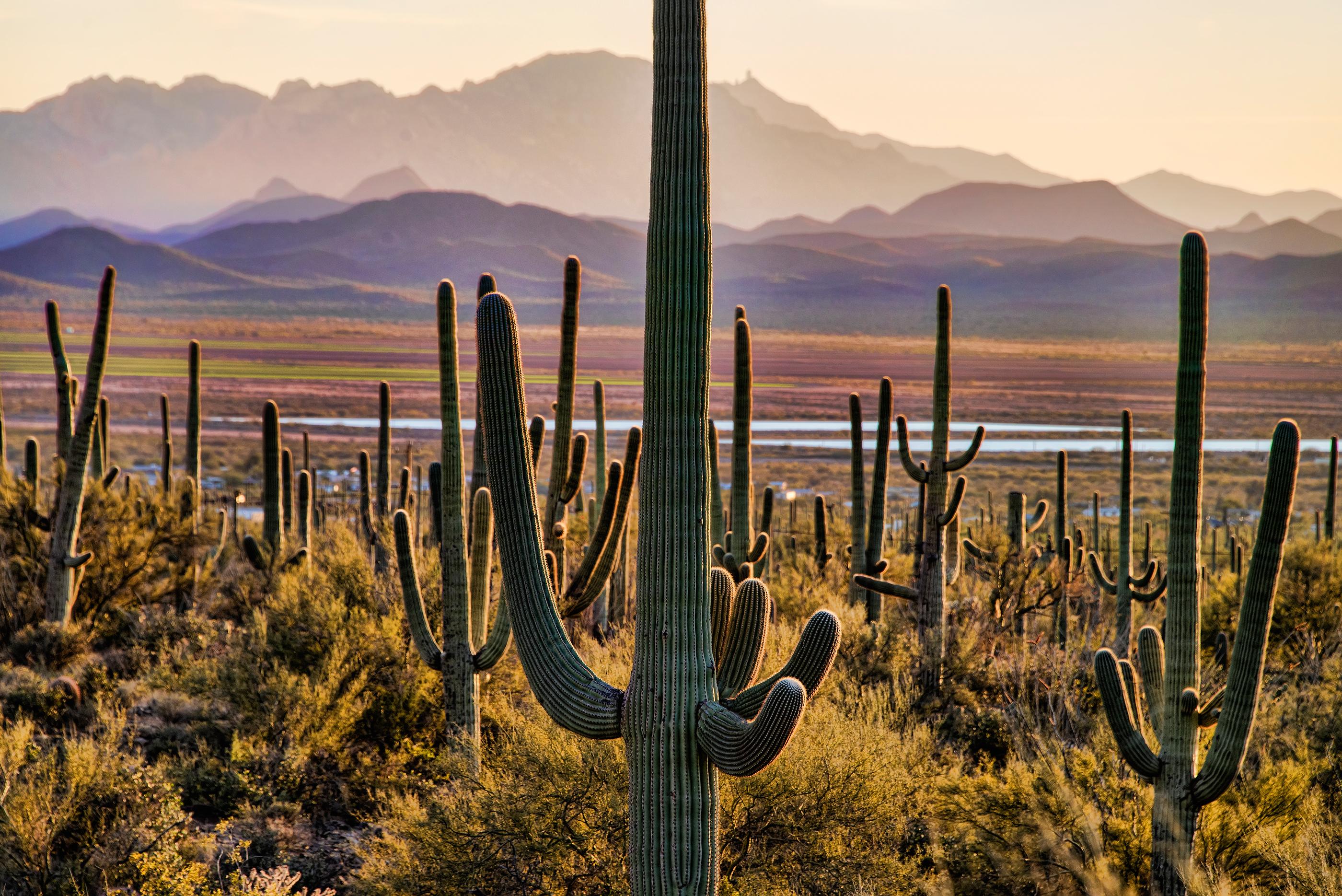180601-best-national-parks-saguaro