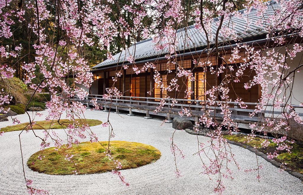 Cherry Blossoms at Portland Japanese Garden