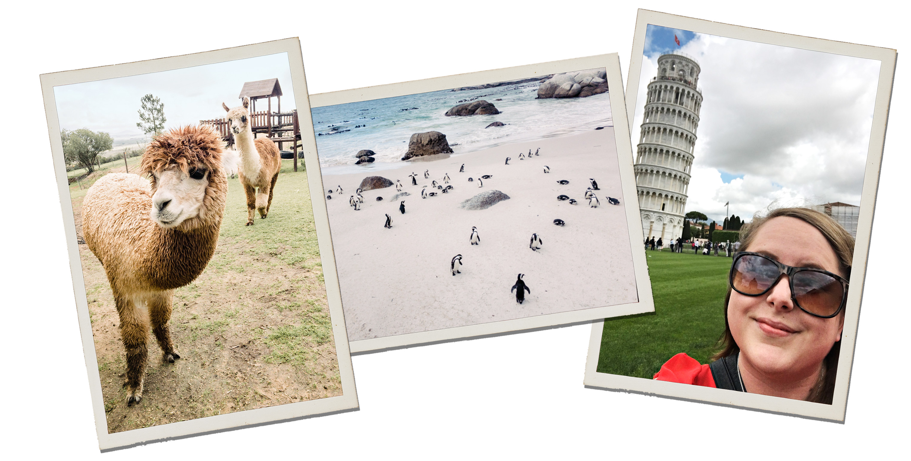 (Left to right) Alycia Moore, a wedding photographer, enjoyed a close encounter with an alpaca in South Africa; Moore also stumbled upon a colony of penguins at the beach near Simons Town; Moore poses with the Leaning Tower of Pisa.