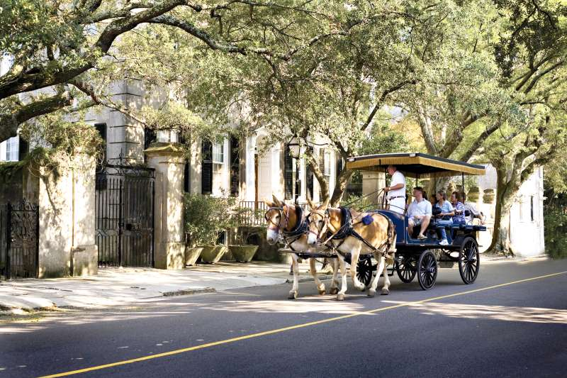 horse drawn carriage in Charleston South Carolina