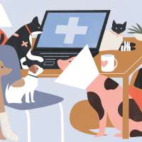 Illustration of several bandaged cats and dogs, near a desk with a laptop displaying a medical cross