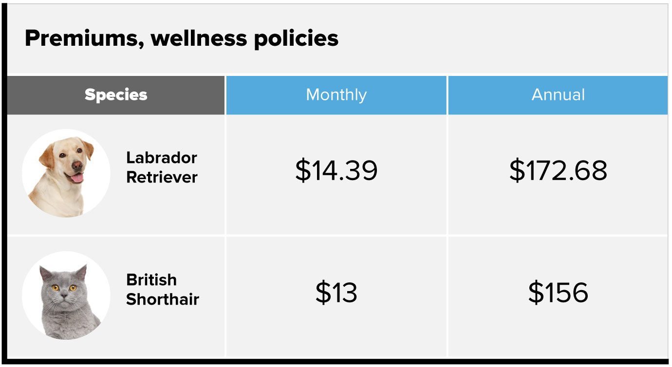 Premiums, wellness policies chart. Labrador retriever dog, $14.39 monthly, $172.68 annually. British shorthair cat, $13 monthly, $156 annually.