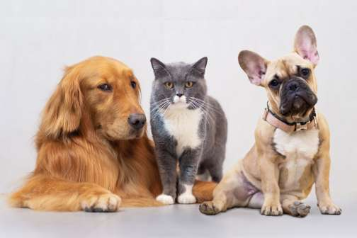 Cats vs. Dogs? When It Comes to Pet Insurance Premiums, There's a Clear Winner
