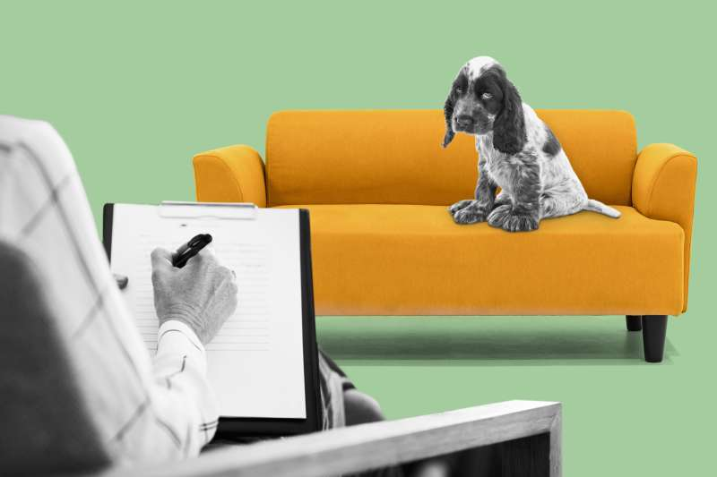 Dog sitting on therapist couch