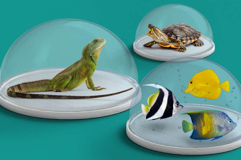 A lizard, turtle and exotic fish isolated in a glass container