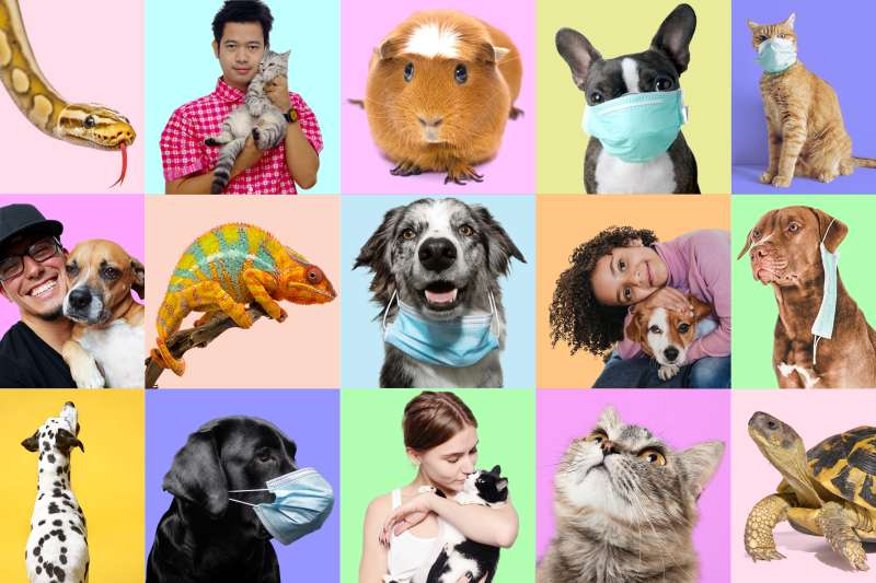 Grid photo collage of different pets with and without their owners. Some have surgical masks on.