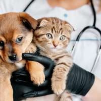 Puppy And A Kitten Being Held By A Veterinarian