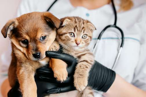 Why Choosing a Higher Pet Insurance Deductible Can Pay Off