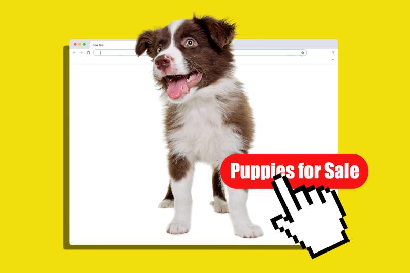 Collage of a puppy on a web browser with a cursor pressing on a Sale button