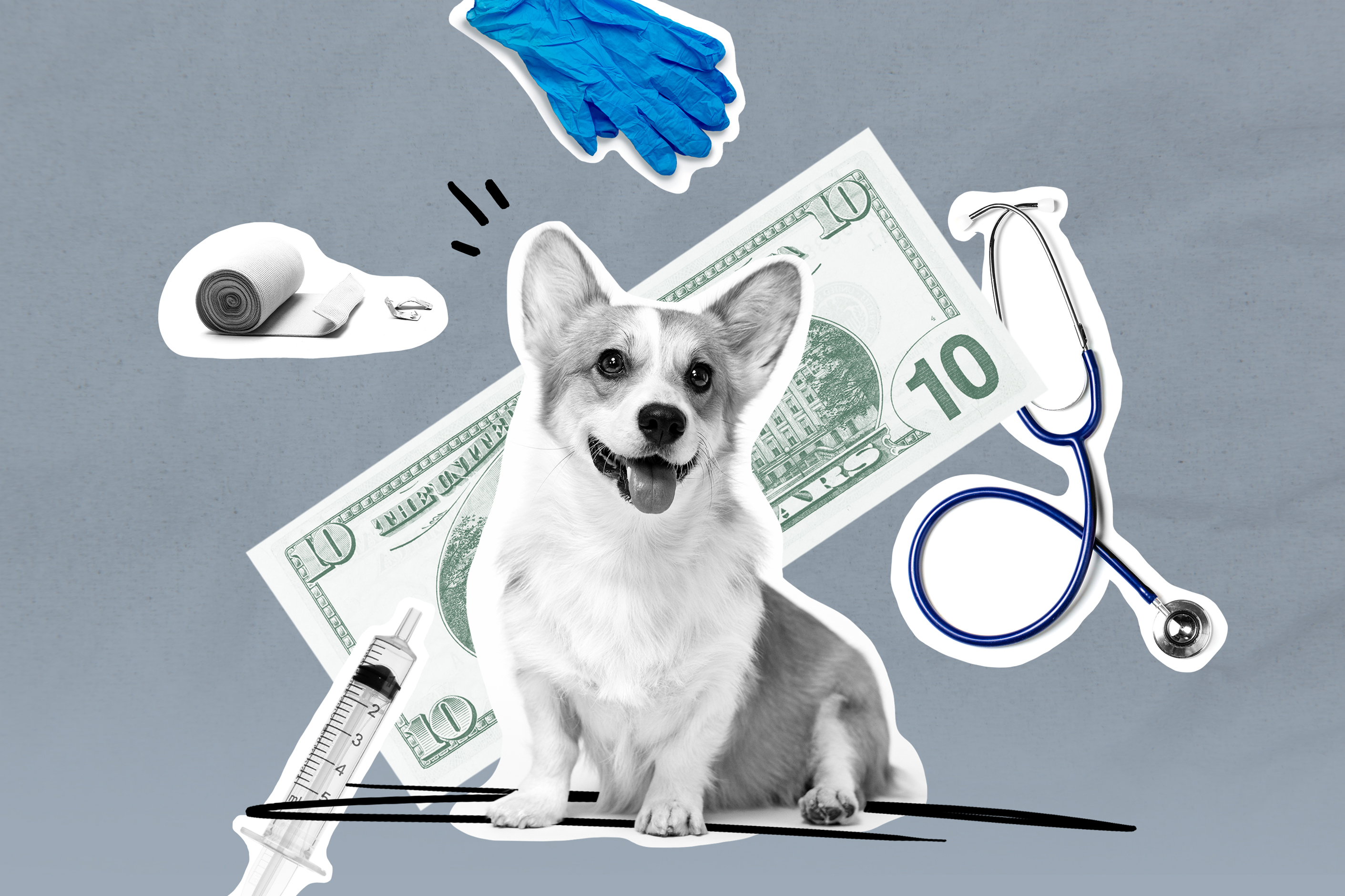 How to Buy Pet Insurance | Money