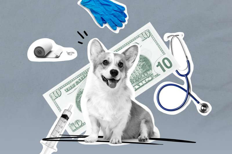 Photo Collage of a Corgi with a ten dollar bill, medical gloves, stethoscope, bandages and an injection in the background