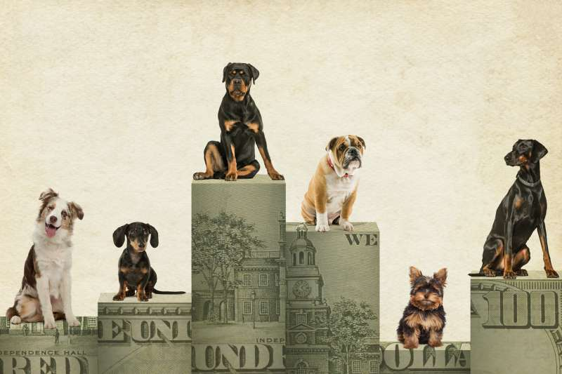 Six different dog breads on top of blocks made out of hundred dollar bills.