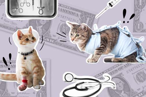 Prices Are Going Down: Now is the Time To Buy Pet Insurance