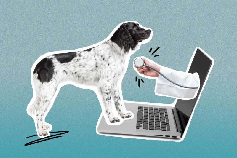 Collage of dog standing in-front of a laptop with a veterinarian's hand coming out of the screen with a stethoscope